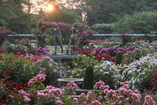 春のバラ、まだまだお楽しみ頂けると思います 里見公園にて