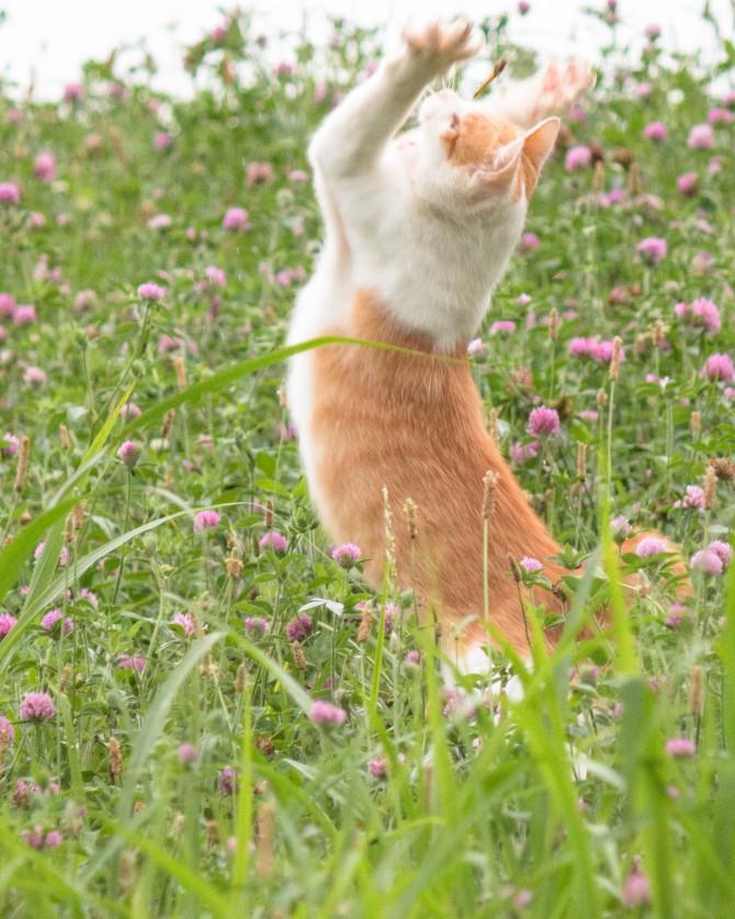 アカツメクサの草むらの中で