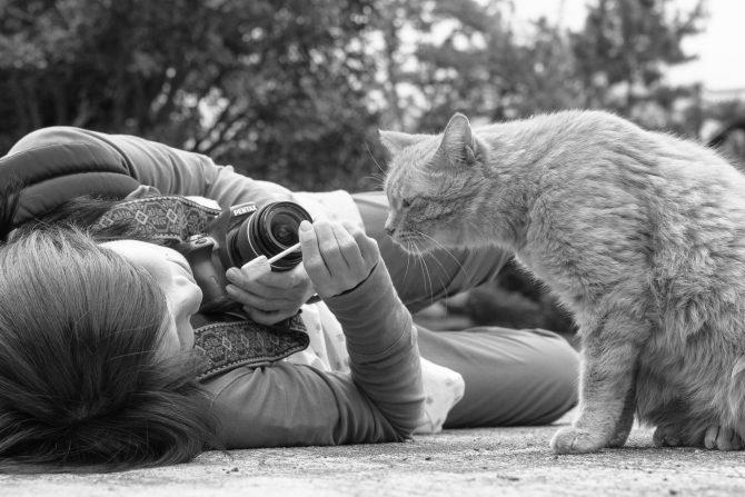 お家の猫ちゃんの出張撮影、始めました