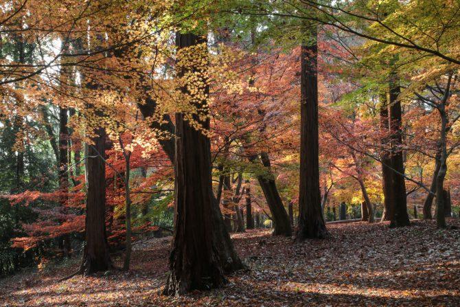 大町自然観察園のもみじ山が開放されます 2016年11月19日(土)~12月4日(日)