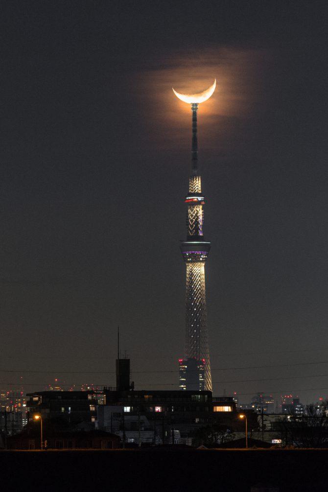 江戸川より 1月14日撮影