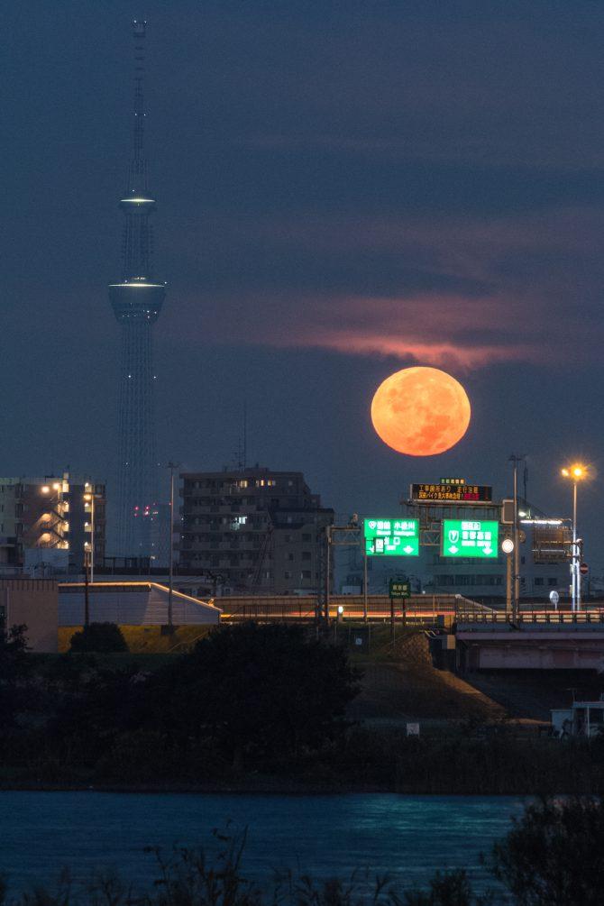 江戸川より 10月16日撮影