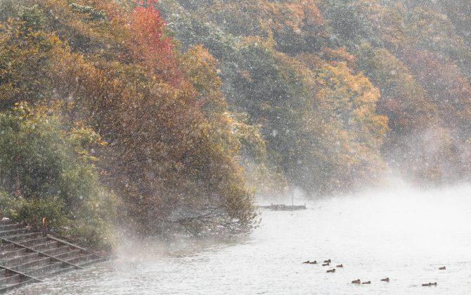 江戸川にて 11月24日撮影