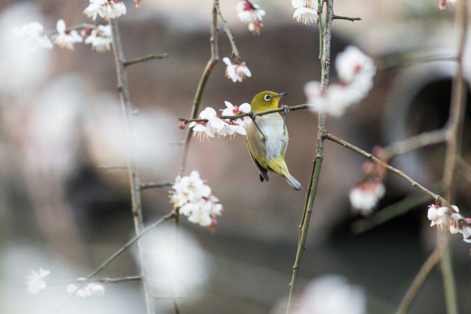 じゅん菜池緑地にて 2月16日撮影