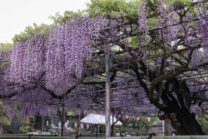 高圓寺にて 4月27日撮影