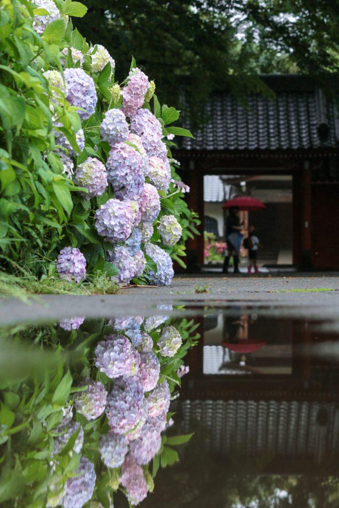 真間山弘法寺にて 6月9日撮影