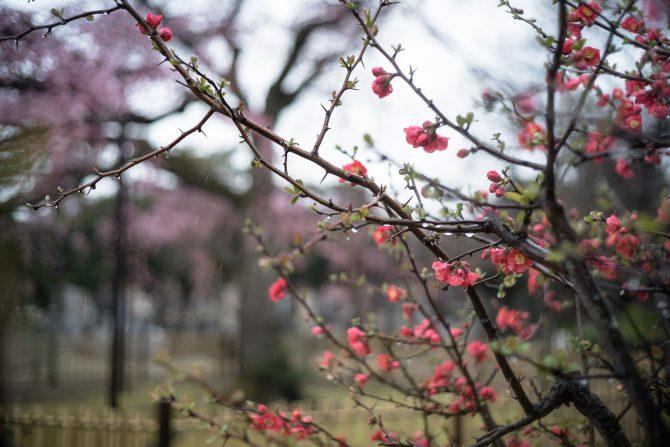 しだれ桜の前で