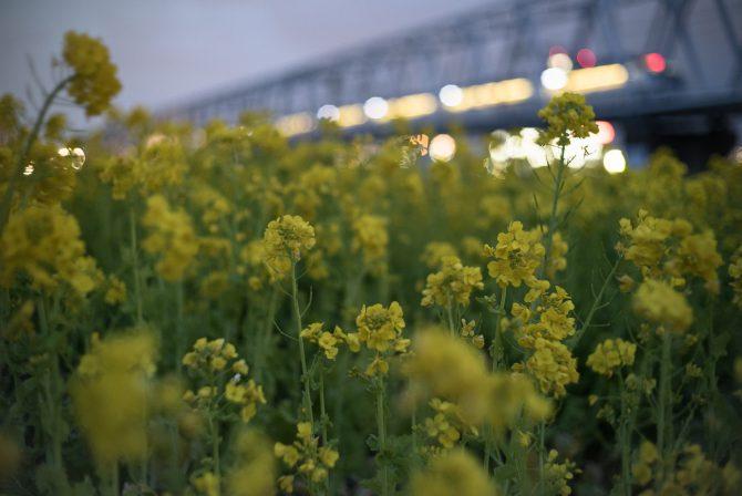 春の江戸川河川敷にて