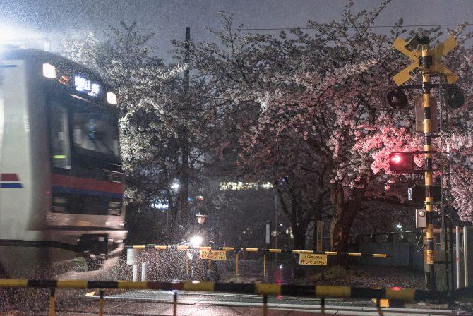 夜桜と雨の踏切