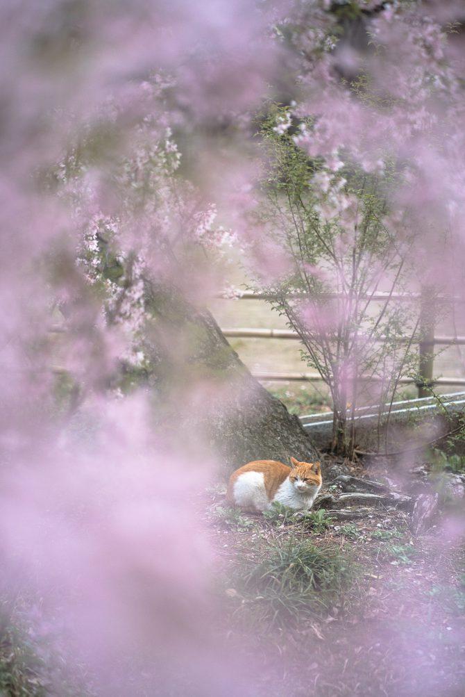 しだれ桜のすぐそばで
