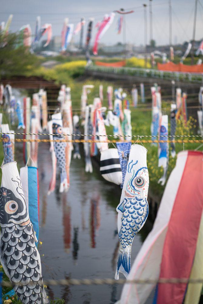 鯉のぼりフェスティバル 2017 国分川調整池付近にて