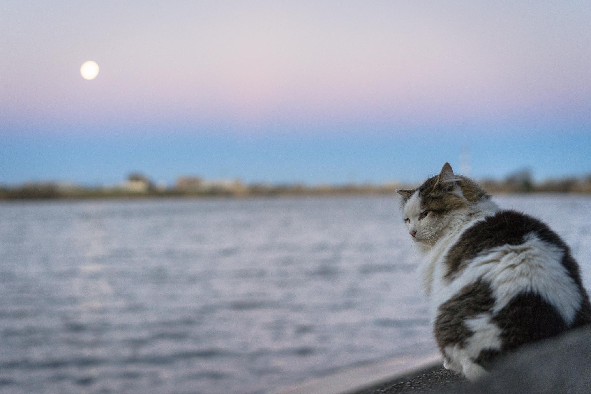 月とヴィーナスの帯とオレ