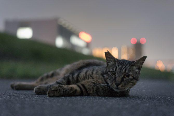 夜のリラックスタイム