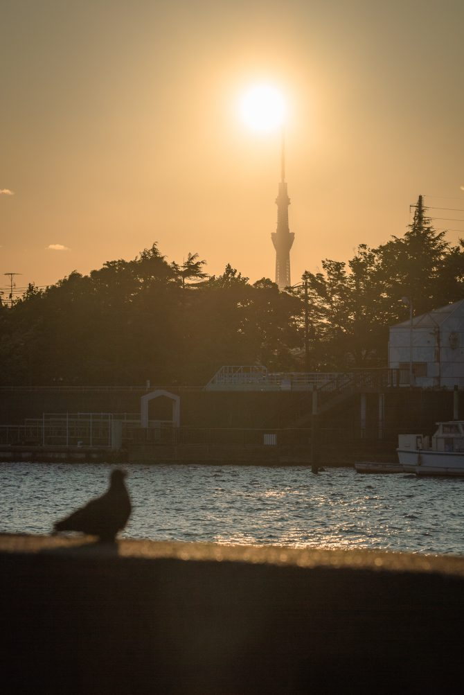 夕陽と東京スカイツリー