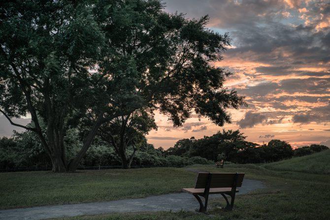 大樹と夕焼け