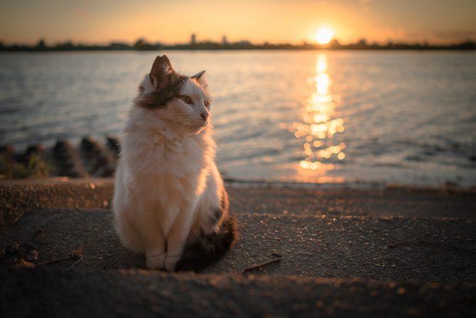 夕陽を浴びながら
