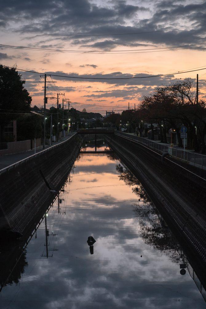 真間川の朝