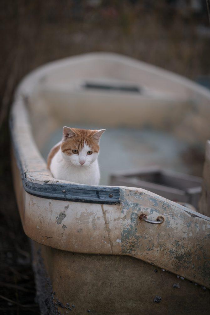 小さな船頭さん