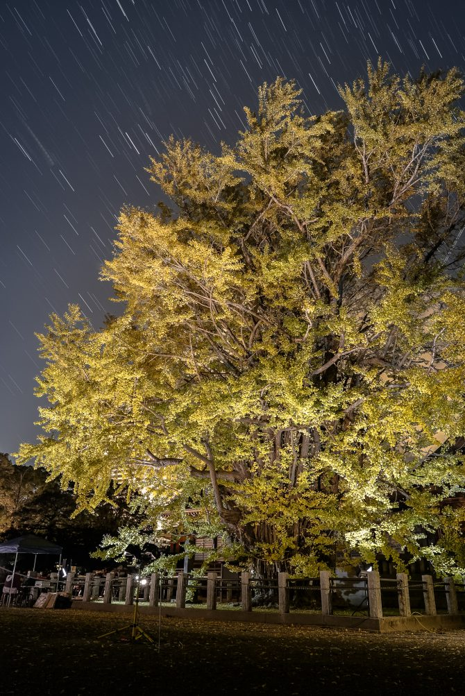 千本公孫樹(せんぼんいちょう)と星の軌跡