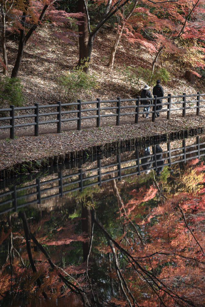 大町自然観察園のもみじ山の開放期間が延長に
