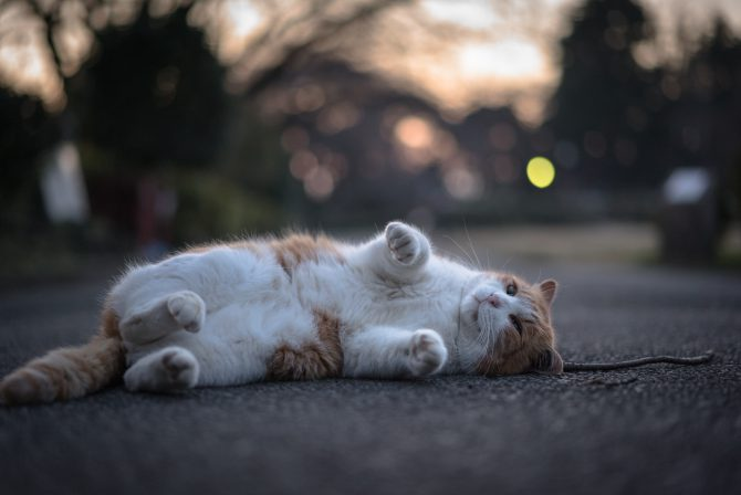 日没後のリラックスタイム