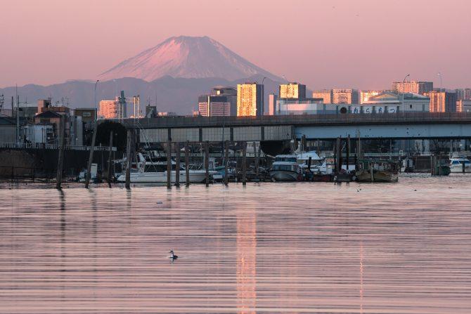 桃色の富士山と旧江戸川