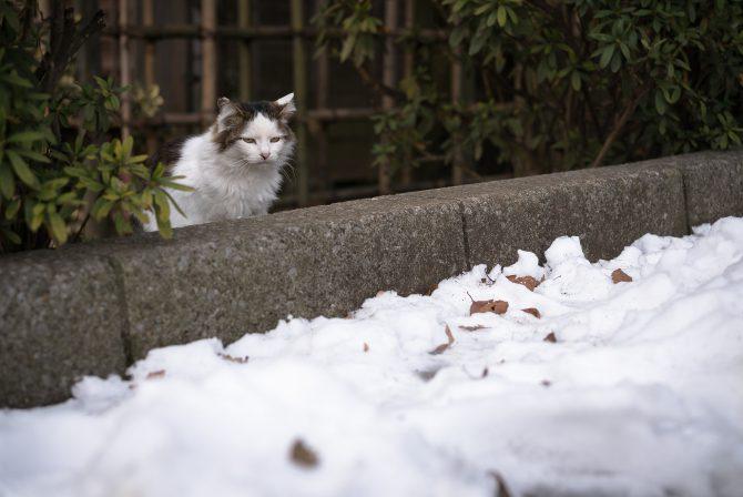 なかなか雪が溶けなくて