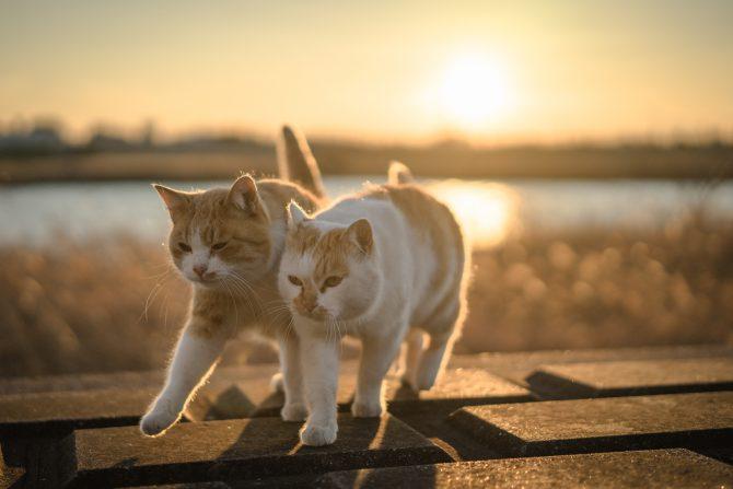 きょうは猫の日