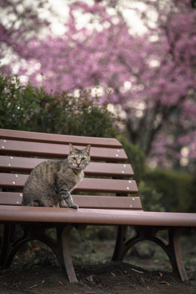 春のベンチ
