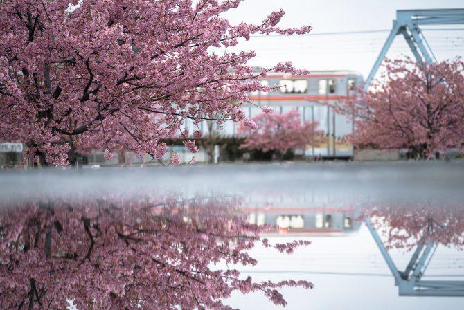河津桜と東西線