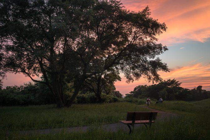 夕焼け空と大樹