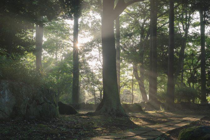光芒(こうぼう)の里見公園