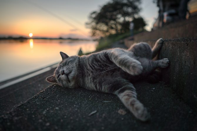 夕暮れのリラックスタイム
