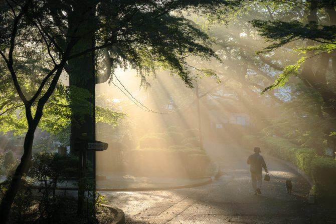 朝の里見公園