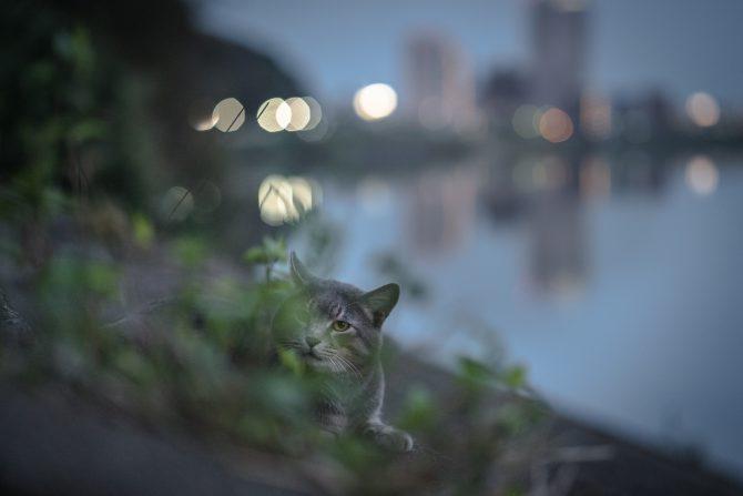 川辺のかくれんぼ