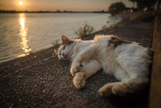 夕陽を浴びながらのんびりと