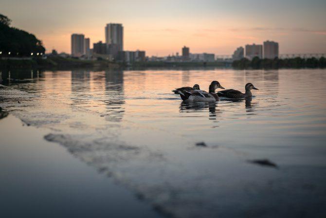 朝焼けの江戸川で