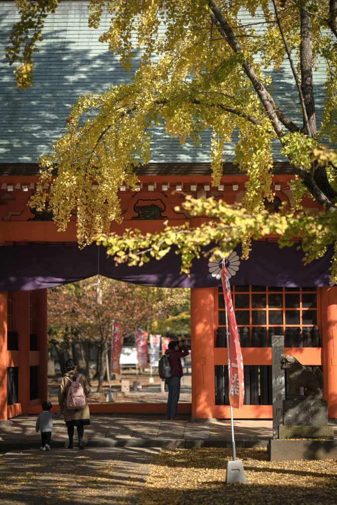 黄葉の葛飾八幡宮参道
