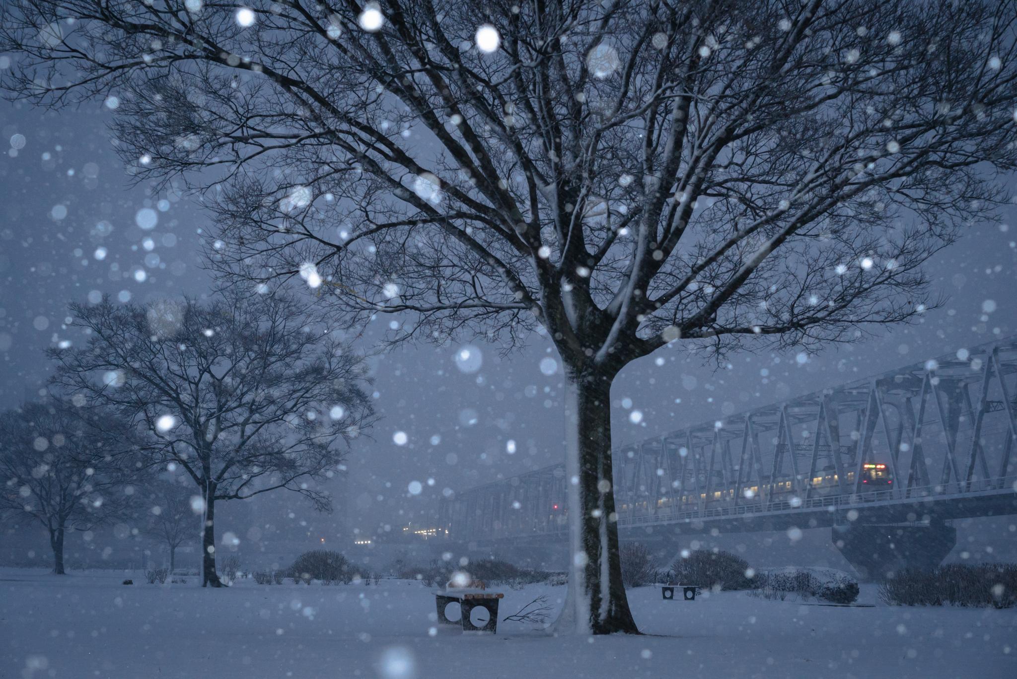 「雪の江戸川河川敷と京成線」 小岩菖蒲園より