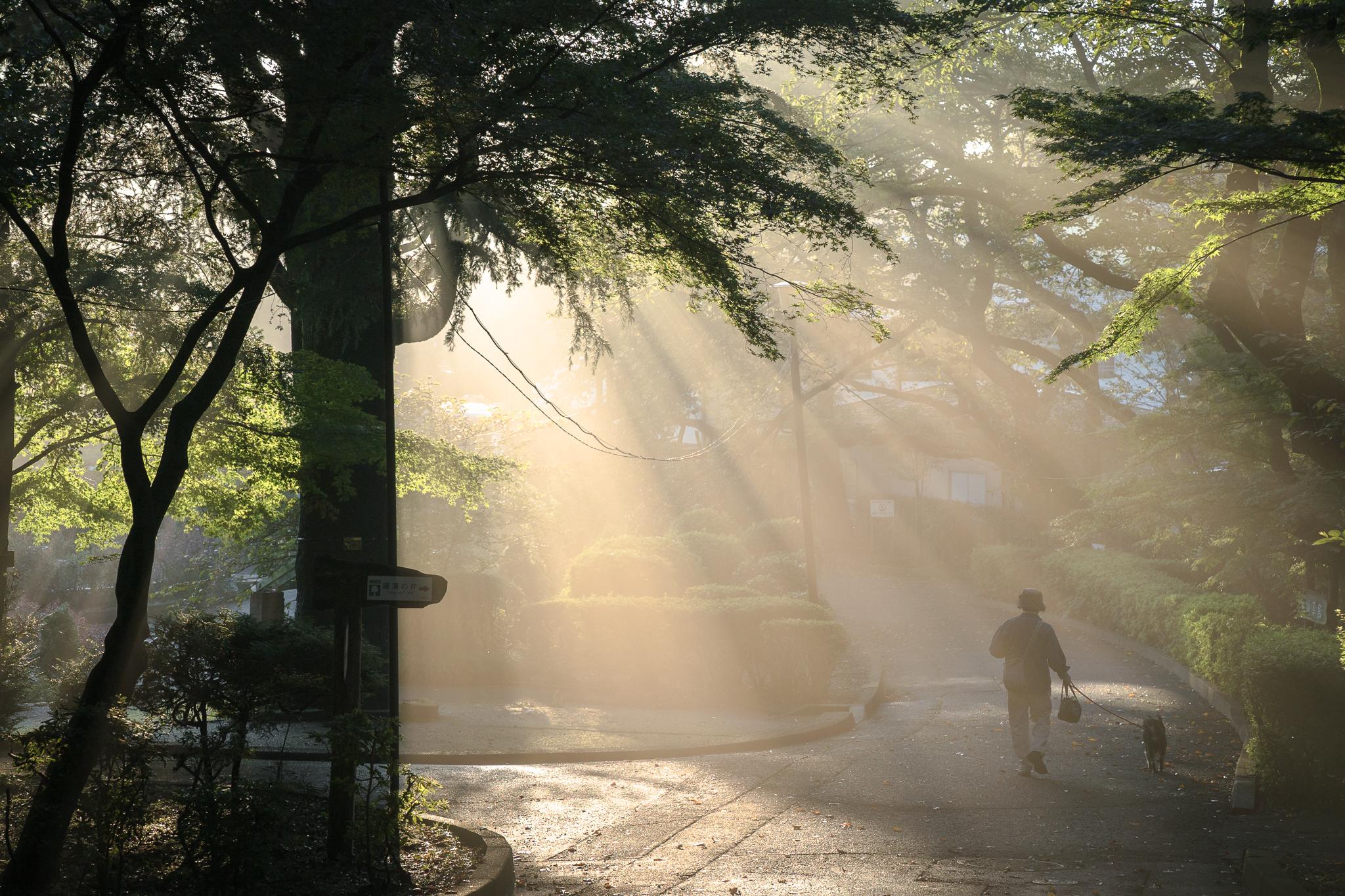「朝の里見公園」
