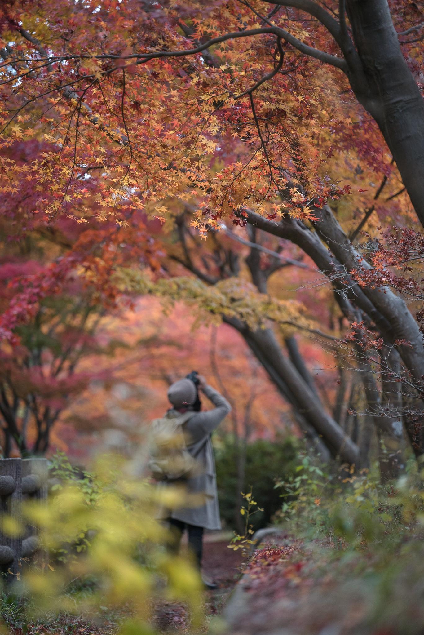 「大町公園の紅葉」