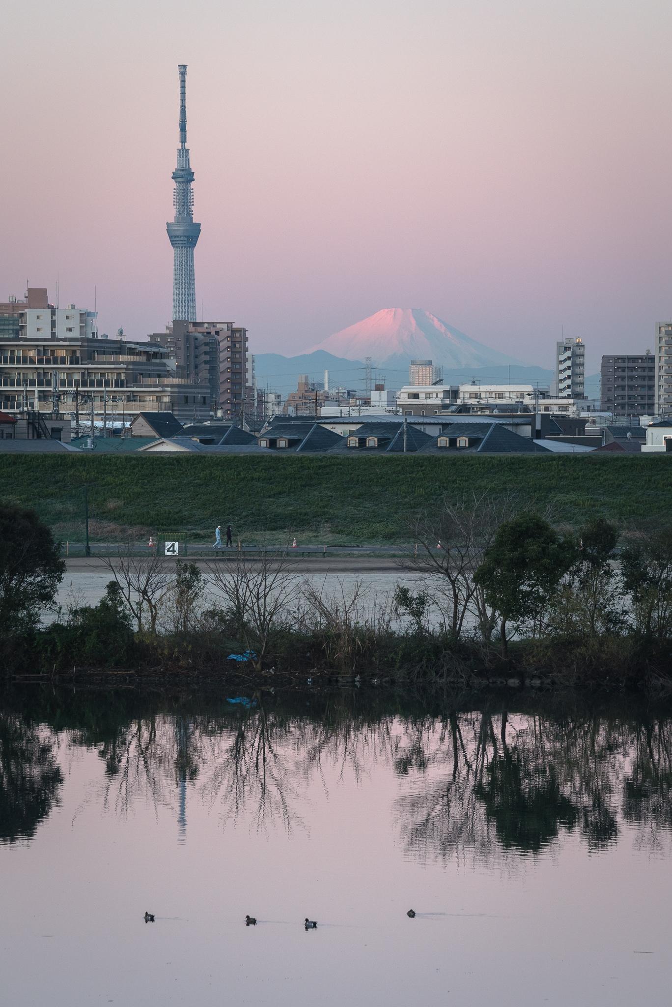 「桃色の富士山、スカイツリーと江戸川」 江戸川の土手より
