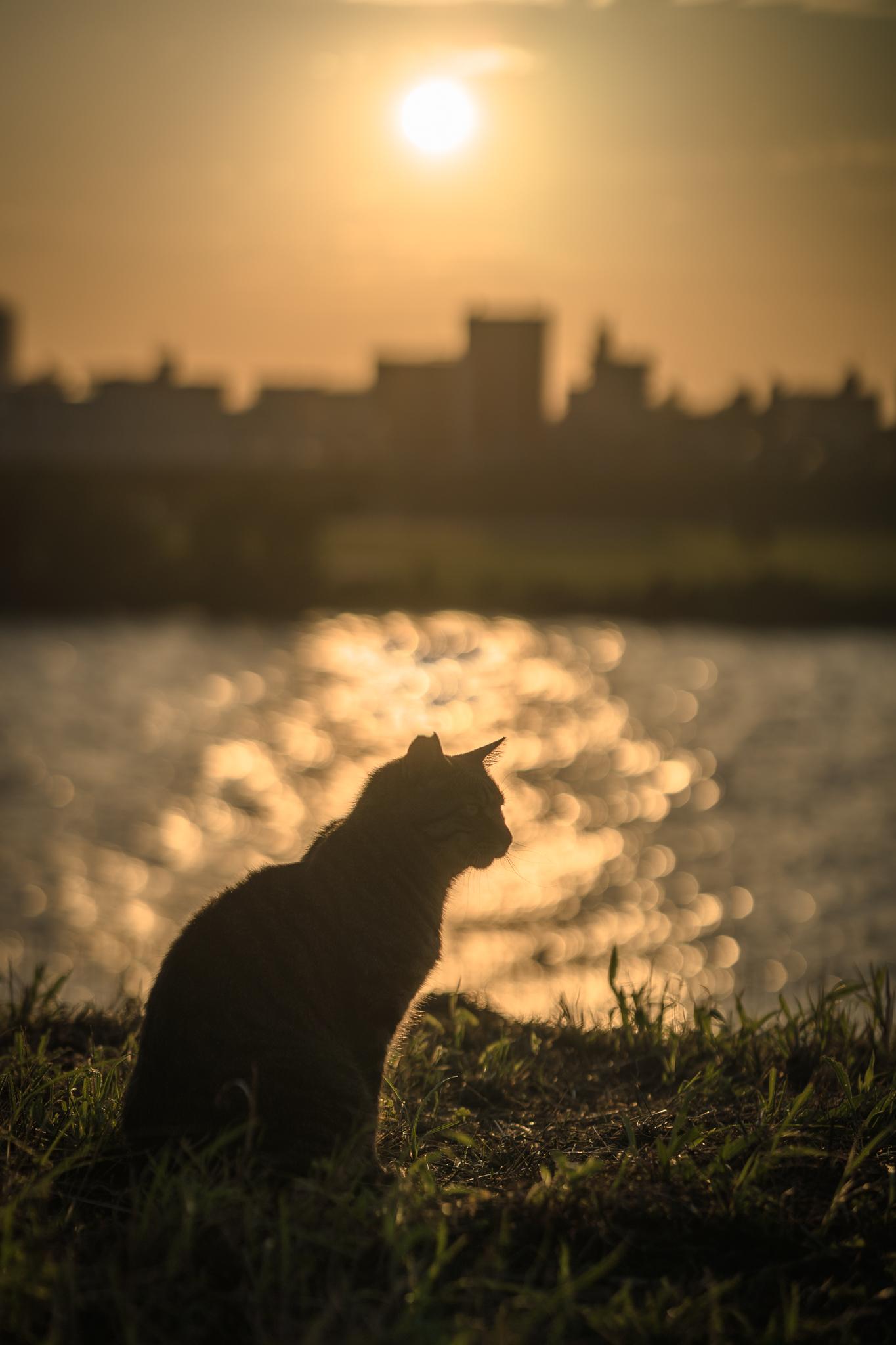 「夕陽を浴びて」