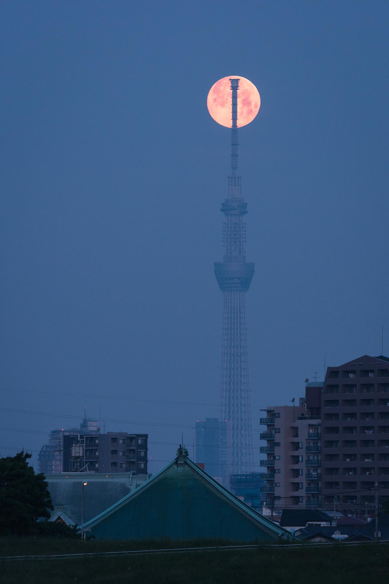 「沈む間際の満月とスカイツリー」 江戸川の土手より