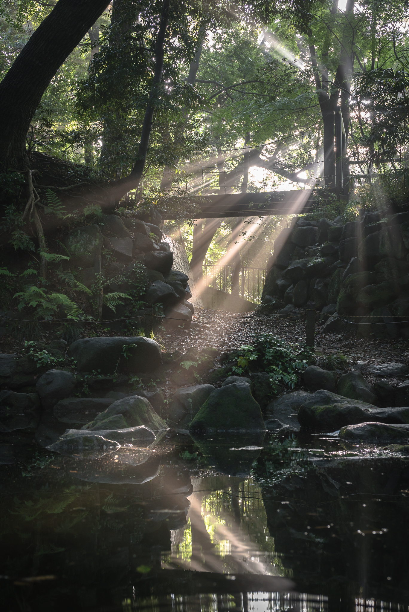 「光芒の吊り橋」 里見公園にて