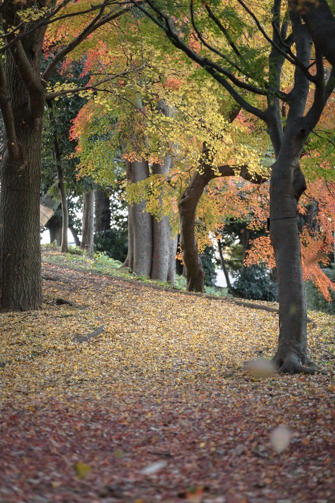 紅葉と黄色い道
