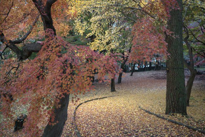 紅葉と落ち葉のじゅうたん