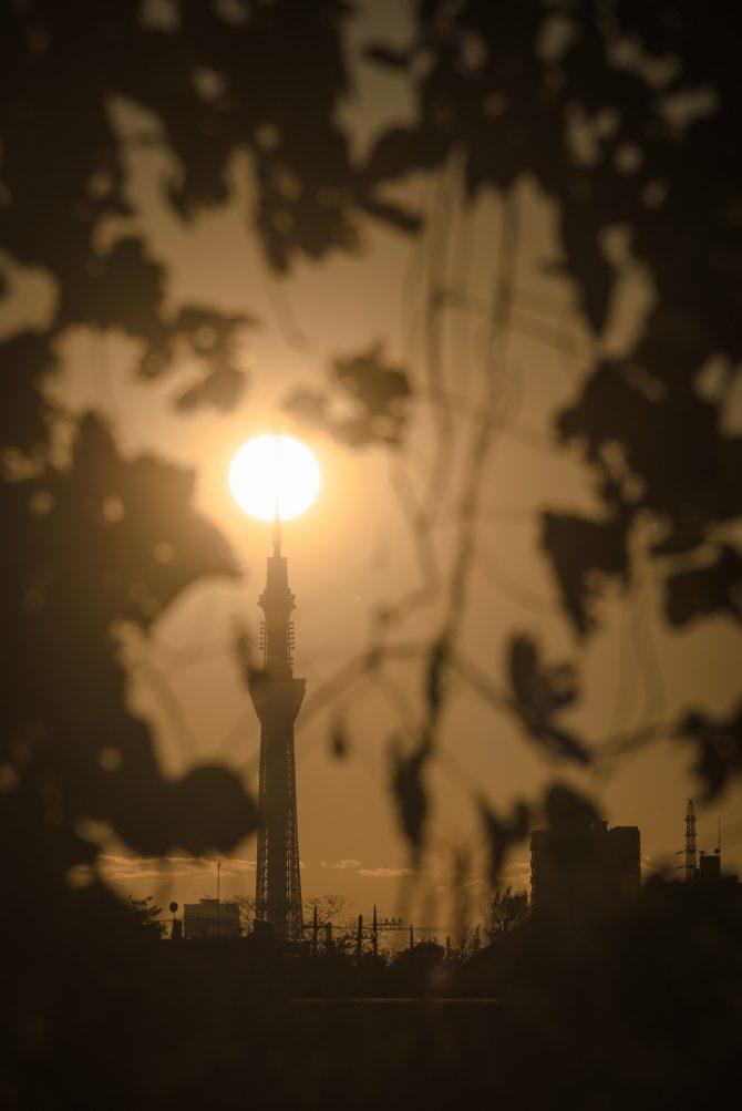 夕陽とスカイツリー