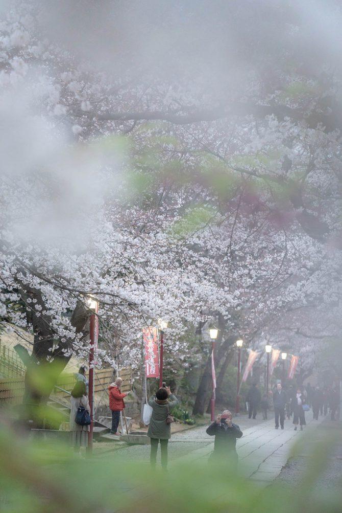 日没頃の中山法華経寺参道にて