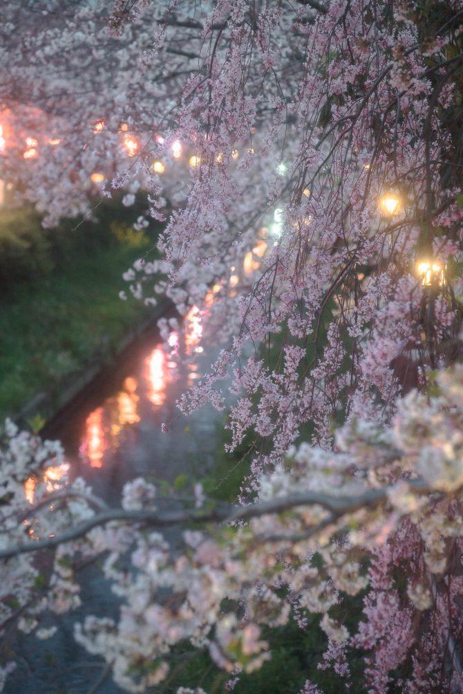 夜の真間川にて